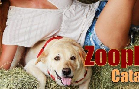 Zoophilia
