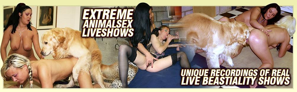 Dog Sex Live Series