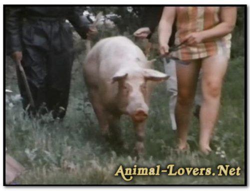 Bodil Joensen – Animal Sex Pornstars – Bodil Joensen