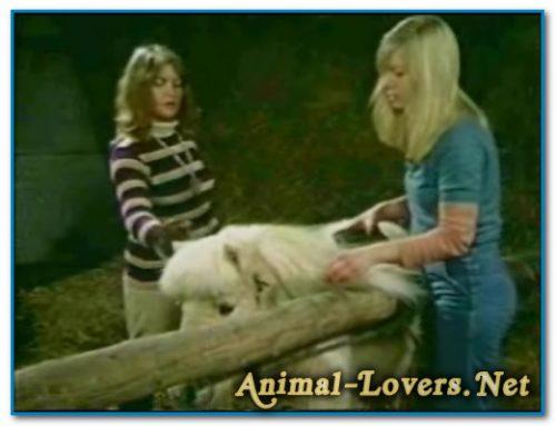 Bodil Joensen – Animal Sex Pornstars – Bodil And Pony