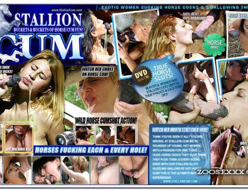 StallionCum.Com