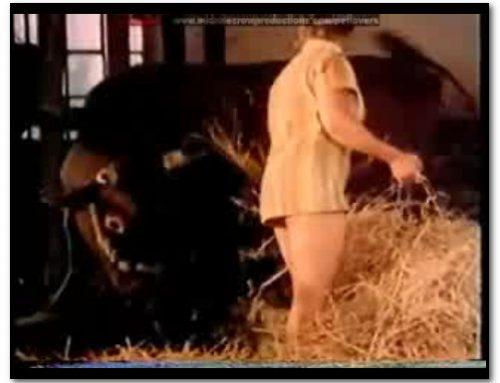 Bodil Joensen – Animal Sex Pornstars – Bestia
